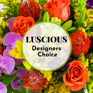Luscious Designers Choice